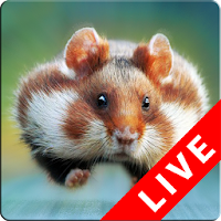 Download Hamster Live Wallpapers Free For Android Hamster Live Wallpapers Apk Download Steprimo Com Последние твиты от xhamsterlive (@xhamsterlive). download hamster live wallpapers free for android hamster live wallpapers apk download steprimo com