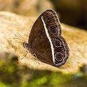 Dark Grass Brown