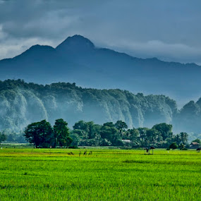 My  Vilage by Chusnul Hidayat - Landscapes Mountains & Hills