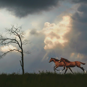 HURRICANE HORSES by Debby  Raskin - Landscapes Prairies, Meadows & Fields ( gallop, field, clouds, tree, horse, storm, run )