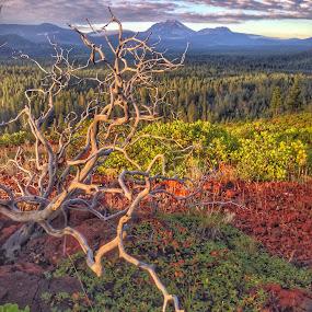 Twisted by Becca McKinnon - Instagram & Mobile iPhone ( lassennational park, clouds, mountain, lassen, manzanita, lassen peak )