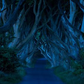 The Dark Hedges in Ireland by Anna Stephens - Landscapes Forests ( ireland, dark hedges, county antrium )