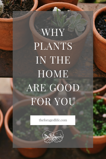 Why Plants in the Home are Goof For You | It can be tricky looking after houseplants - but it is definitely something you can learn! Once you have read these benefits of having plants and why plants in the home are good for you, you'll want to run straight to the nursery! | Living with Nature by The Foraged Life