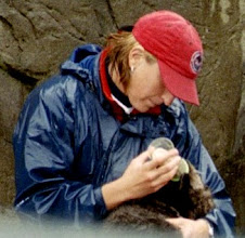 Photo: Otter Feeding Time at the Stanley Park Zoo, Vancouver, B.C. (October 2004)