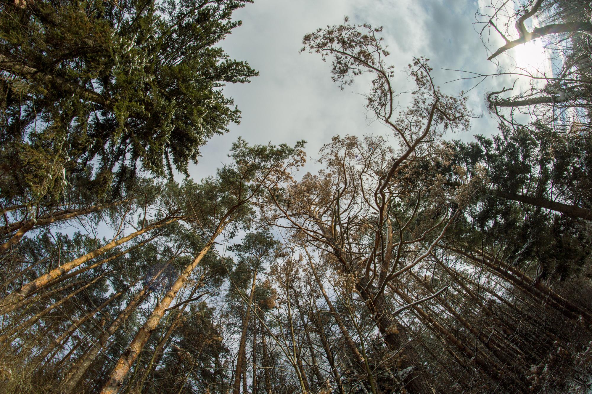 Ліс біля с. Березина