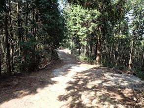林道に出る