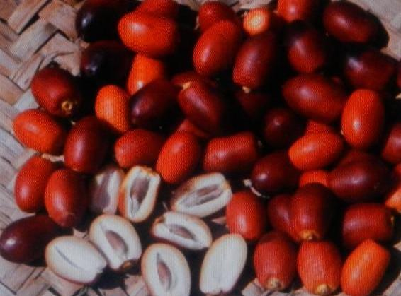 FRESH DATES.....Store in refrigerator away from aromatic foods or freeze. Add to cakes, shakes,...
