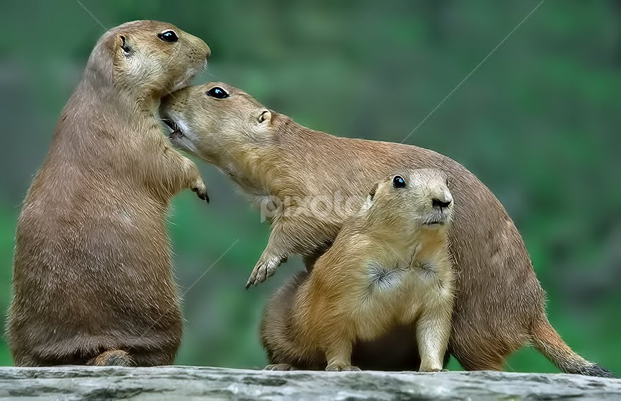 A Threesome by Shelly Wetzel - Animals Other Mammals
