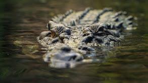 Girls Catch Crocs Too thumbnail