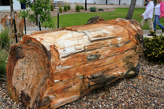Photo: These are massive petrified logs!