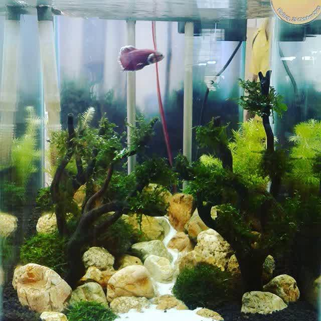 1000 Aquascape Design Ideas Android Apps on Google Play