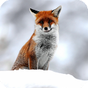 Cute Fox Live Wallpaper icon