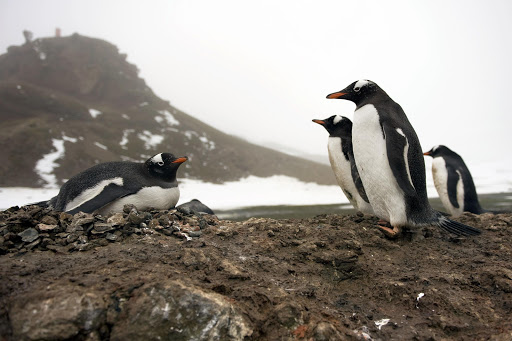 Runners at the Antarctica Marathon next month will be running alongside penguins on King George Island.