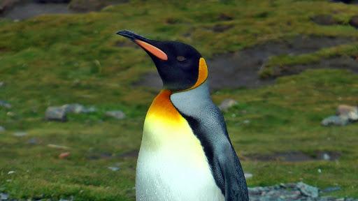 Falkland Islands and South Georgia 2014