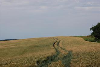 Photo: Pole w Kupinie (Kuppen) nad jez. Ewingi