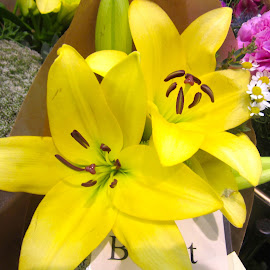 Lily by Viive Selg - Flowers Flower Gardens (  )