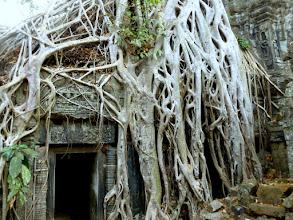 Photo: Abandoned for 400 years, Ta Prohm temple was found by the French in the mid-1800s and left mostly as they found it.  Raiders of the Lost Ark was filmed here.