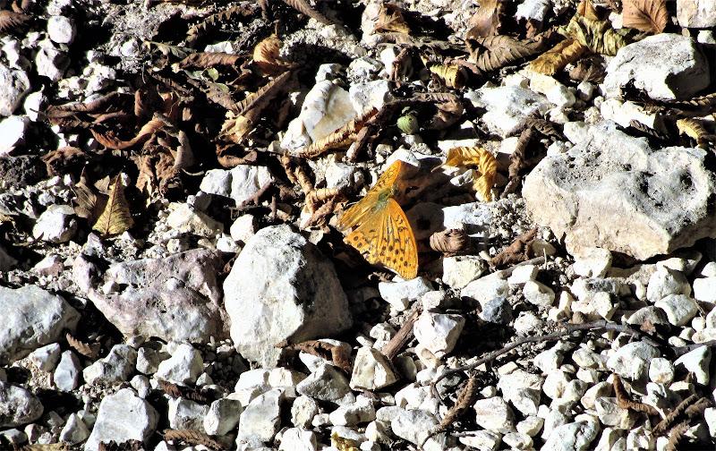 farfalla e settemre di gianni_vita