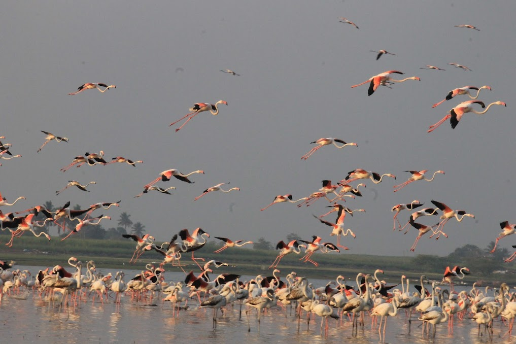 Birding near Pune