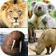 Animals Quiz