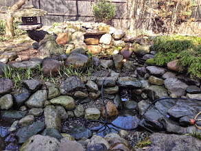 Photo: #PondMaintenance #PondServices Monroe County Rochester NY by Acorn Ponds & Waterfalls, Certified Aquascape Contractor Since 2004.  Check out our website www.acornponds.com and give us a call 585.442.6373.  Another Pond is cleaned and ready for summer enjoyment. One of the things we do while performing pond maintenance is check the under water lighting and replace fixtures and bulbs as necessary. It is a good idea to clean your pond every spring. After that, just add beneficial bacteria and water.  This pond was completed by Acorn Ponds & Waterfalls several years ago and has held up good over the years.  Contact Acorn Ponds & Waterfalls today at 585-442-6373. We can help you with any pond problems you might have. www.acornponds.com  Click here to learn more about Pond Maintenance Services: www.acornponds.com/pond-maintenance.html  For more info on this installation of this pond, please click here: www.facebook.com/notes/acorn-landscaping-landscape-designlightingbackyard-water-gardens/backyard-pond-remodel-pond-restoration-pond-upgrade-replace-in-rochester-park-av/242460159124447  Click here for a free magazine about ponds and water features by Acorn Ponds & Waterfalls, Certified Aquascape Contractor since 2004: http://flip.it/gsrNN  Sign up for your personal pond design consultation here: www.acornponds.com/contact-us.html  Acorn Ponds & Waterfalls  585.442.6373 www.acornponds.com