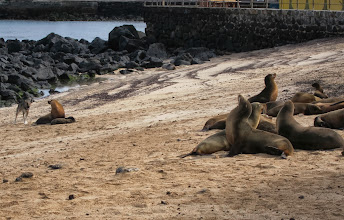 Photo: Dog vs. sea lion
