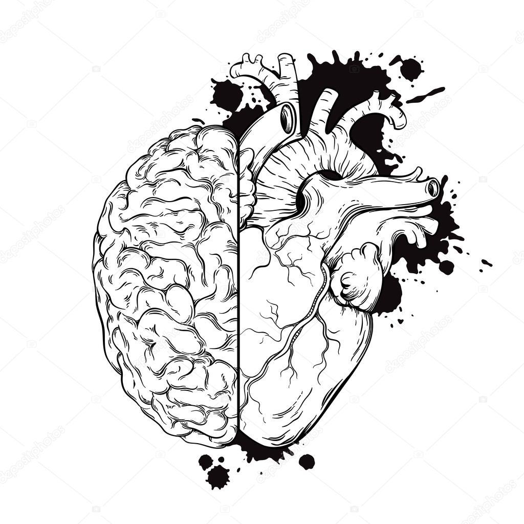 coração e cérebro