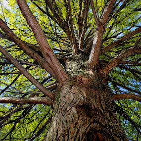 by Mark Wathen - Nature Up Close Trees & Bushes