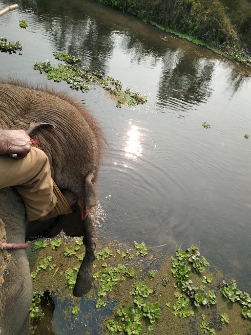 象に乗って川を渡る。