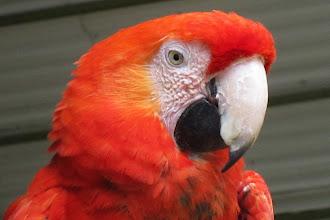 Foto: ... och hans röda kompis