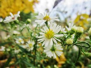 Photo: Little white flowers among golden leaves at Eastwood Park in Dayton, Ohio.