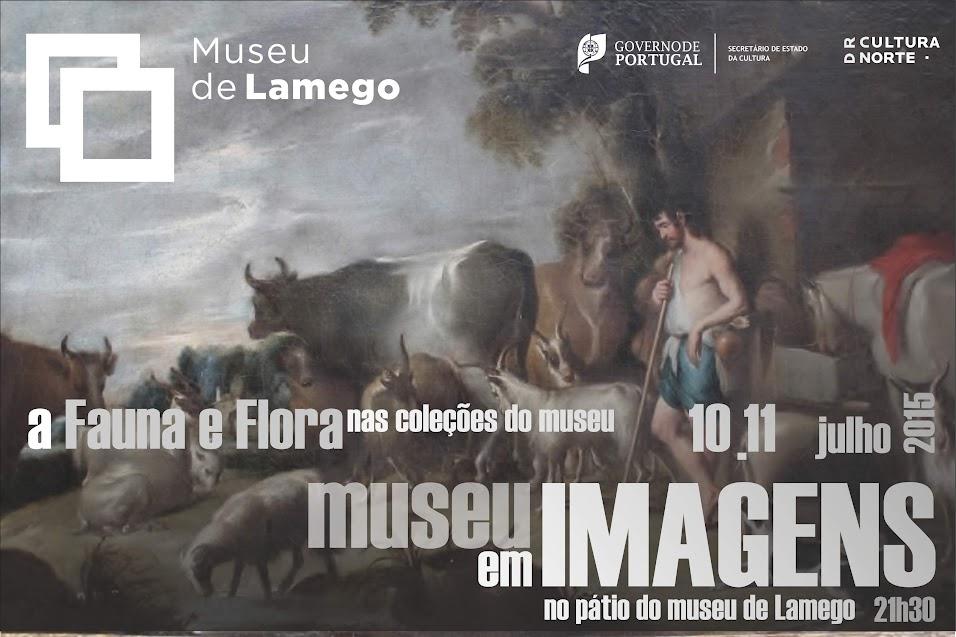 Museu em Imagens | A Fauna e a Flora nas coleções do Museu de Lamego
