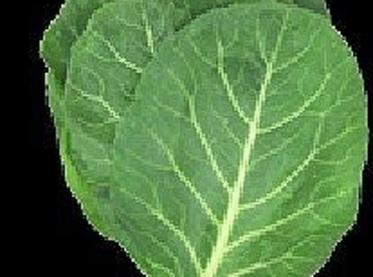 Prep collards - wash and remove stems, then place leafs on top of each...