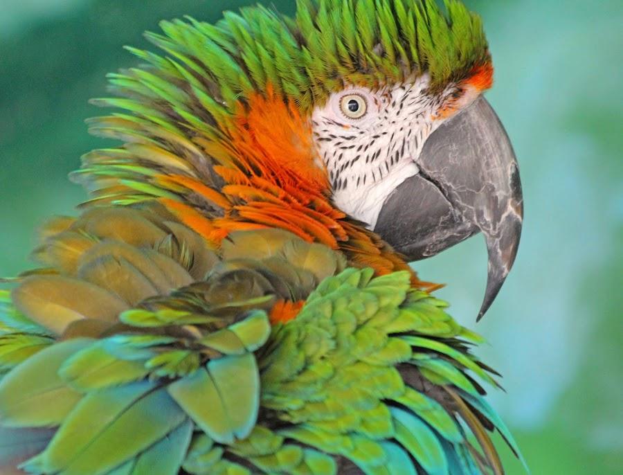 by Sam Sampson - Animals Birds