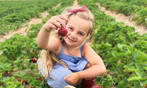 7 Farms To Pick Fresh Fruit From Near Toronto This Season
