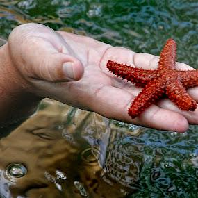 Estrella de mar by Nallely Martinez - Animals Sea Creatures ( water, starfish, sea, estrella,  )