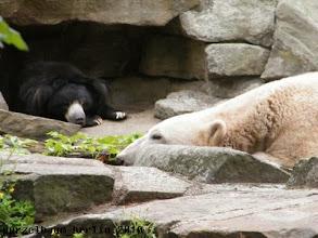 Photo: Knut und der Lippenbaer doesen ;-)
