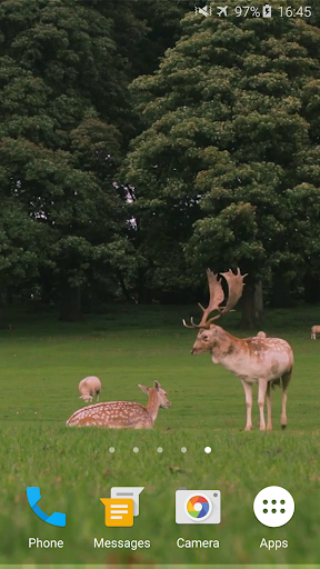 かわいい鹿ライブ壁紙