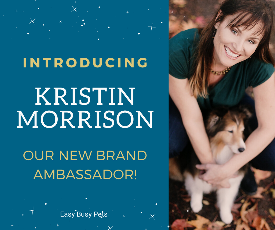 Dog Walker makes over a Million Dollars, interview with Kristin Morrison on Yahoo News