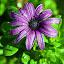 by Melody Pieterse - Flowers Single Flower (  )