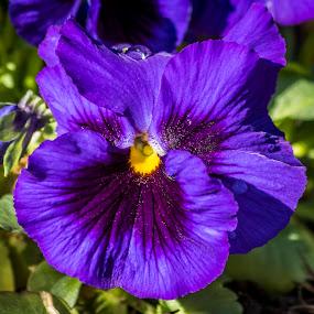 purple #3 by Frank Barnitz - Flowers Flower Gardens ( purple, flowers )