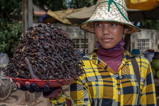 Tarântulas como alimento no Camboja
