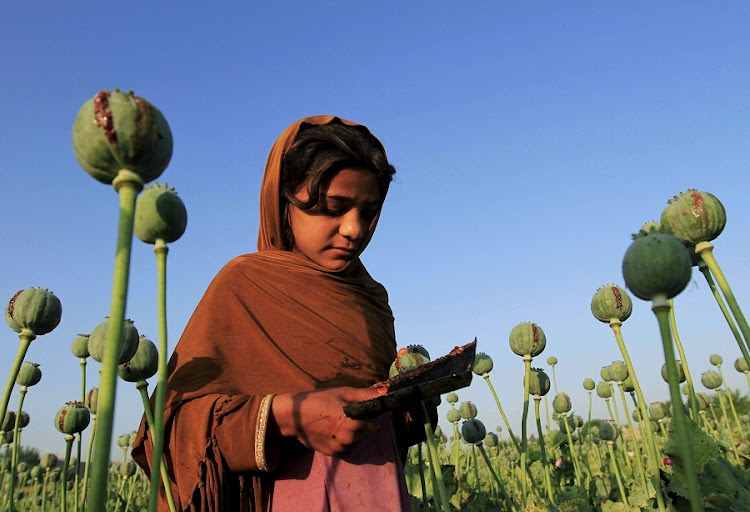 Both heroin and opioid prescription painkillers are derived from the opium poppy. Picture: REUTERS