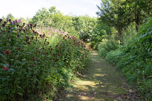 道を彩どる季節折々の野生の花達