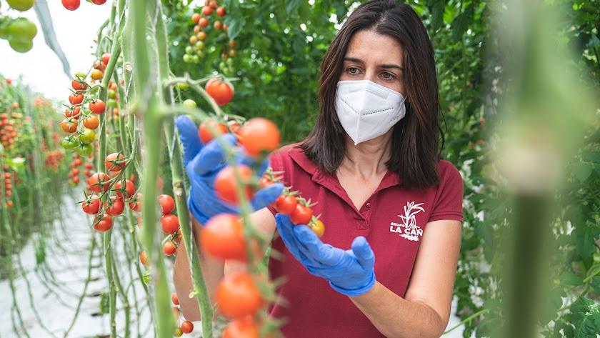 El grupo empresarial agroalimentario está dedicado a la comercialización de frutas y hortalizas frescas.