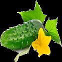 cucumber (cucumber) icon