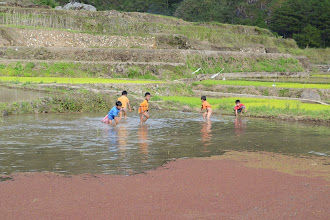 Photo: Kids collecting snails in the rice fields