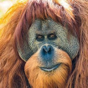 by Ralf  Harimau - Animals Other Mammals