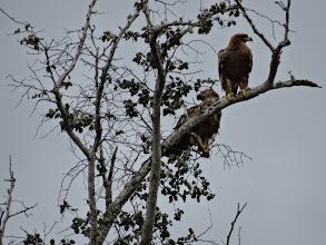 Photo: Eagles