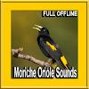 Bird Moriche Oriole Sounds APK
